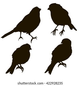 vector , isolated, silhouette of a bird,set