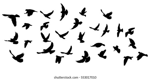 vector, isolated, silhouette flying pigeons