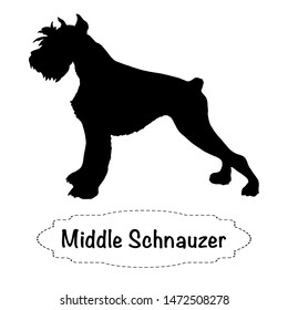 Vector isolated silhouette of  middle schnauzer dog on white background.