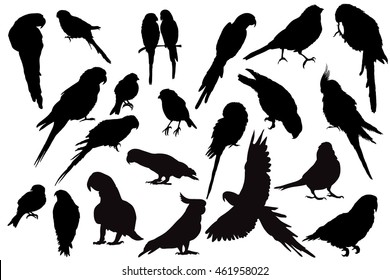 vector isolated silhouette of a parrot set
