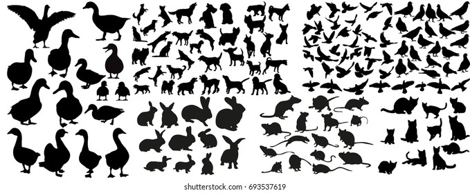 Vector, isolated silhouette of pigeons and crows, cats and dogs, collection of silhouettes of animals