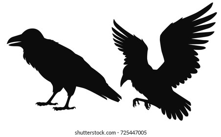 Vector isolated silhouettes of a sitting and flying ravens, crows. Black outline illustration of birds