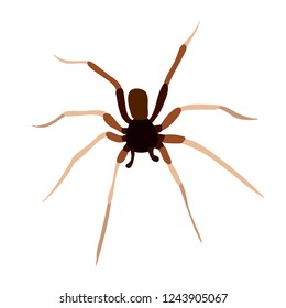 vector isolated spider insect on white background