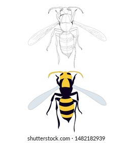 vector, isolated, wasp, bee, on a white background, with sketch