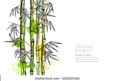 Vector isolated watercolor hand drawn illustration of green organic bamboo plant. Design for prints, asian spa and massage, cosmetics package, materials. Horizontal background with copy space.