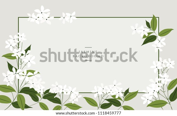Векторные цветочные баннеры жасмина. Дизайн для чая, натуральной косметики, салона красоты, органических продуктов здравоохранения, парфюмерии, эфирного масла, ароматерапии. Может быть использован в качестве поздравительной открытки или приглашения на свадьбу