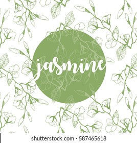 Vector jasmine flowers background and seamless pattern green