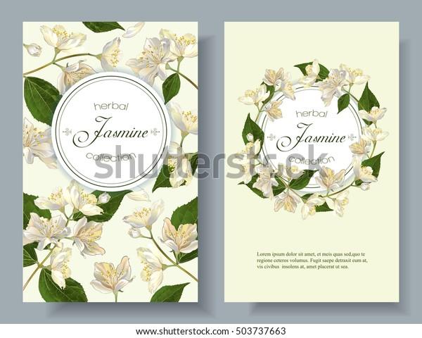 Vector Jasmine Flowers Banner Design Tea Stock Vector Royalty Free 503737663