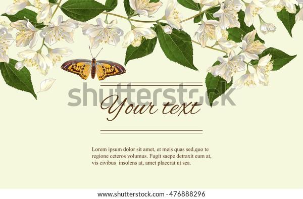 Vector Jasmine Flowers Horizontal Banner Design Stock Vector Royalty Free 476888296