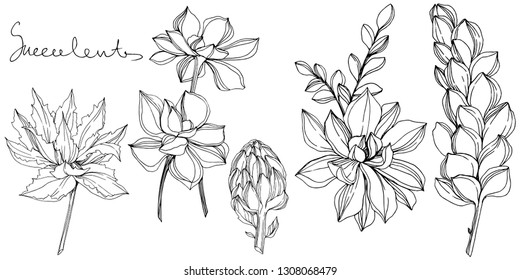 Vector Jungle botanical succulent flower. Wild spring leaf isolated. Black and white engraved ink art. Isolated succulents illustration element.