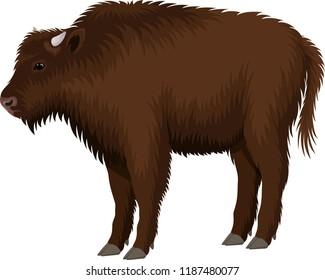 vector kid child brown zubr buffalo bison