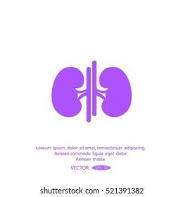 Vector kidney icon.