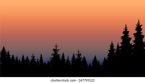 Vector landscape. Silhouette of coniferous trees on the background of colorful sky. Eps 10.