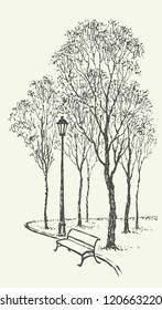Vector landscape. Sketch a park bench near the lantern under the tall trees