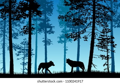 Vector landscape of two wolves in a forest with blue misty background.