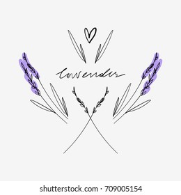 Vector lavender branches. Elements for design, logo and other.