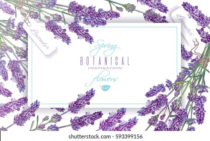 Vector lavender flowers banner on white. Design for natural cosmetics, beauty store, health care products, perfume, essential oil, aromatherapy. Can be used as greeting card or wedding invitation