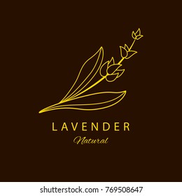 Vector Lavender logo design template and emblem. Beauty and cosmetic oil logotype with lavender. Logo in linear style