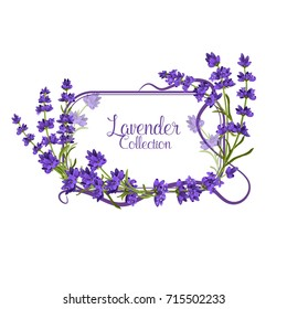 Vector lavender wedding and invitation card template. Vector lavender frame isolated on the white background.