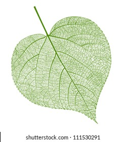 Vector leaf isolated