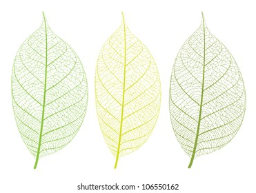 Vector leaf on white background