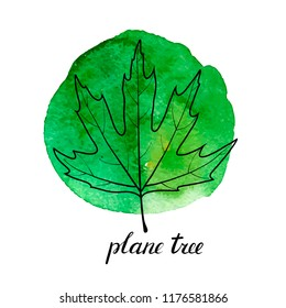 vector leaf of plane tree at green watrcolor paint stains, hand drawn illustration