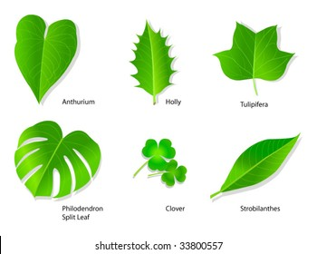 Vector leaves with botanical names