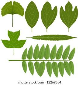 Vector leaves - ginkgo, sassafras, poplar, locust and willow