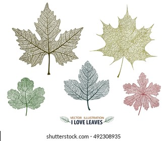 Vector leaves isolated and colorful.