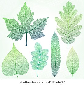 Vector leaves isolated and green.
