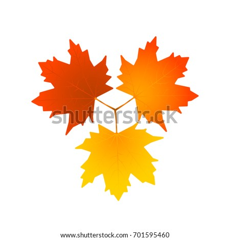 Vector leaves isolated on white background. Vector illustration of three colorful leaves.