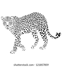 Vector leopard silhouette, can be used for background, card, print materials