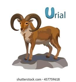 Vector letter U urial children alphabet illustration
