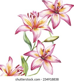 vector lily flowers