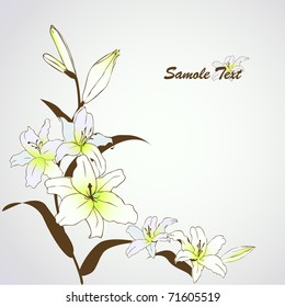 vector lily flowers background