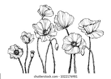 Vector line art with poppies. Black wall art. Monochrome floral background wallpaper. Flower ornament good for web, print and stencil.