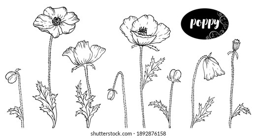 Vector line art with poppies. Monochrome floral background wallpaper. Flower element design for web, print and fabric.