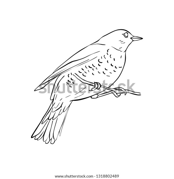 Vector Line Drawing Bird Sitting Tree Stock Vector Royalty