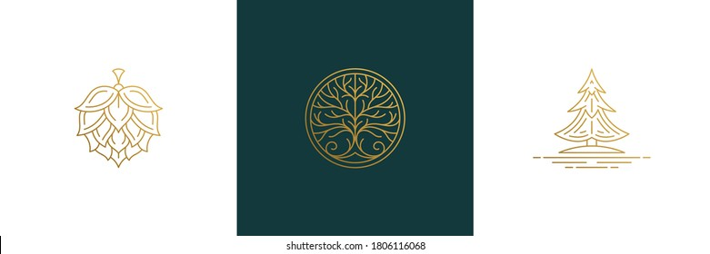 Vector line elegant decoration design elements set - tree and hop illustrations minimal linear style. Collection bohemian delicate outline graphics for logo emblems and product branding