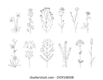 Vector line hand drawn illustration with wildflowers set. Collection of minimalist flowers, herbs and medicinal plants. For logo design, tattoo, postcard