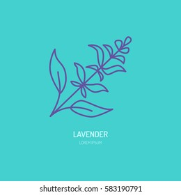 Vector line icon of lavender bunch. Herbal essential oils sign, floral aroma.