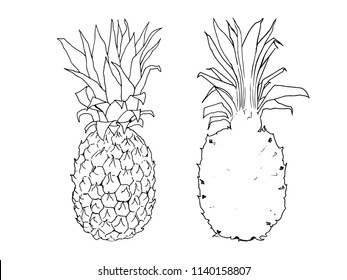 vector line illustration of pineapple. Isolated ananas for label, menu, icon. Black line sketched hand painted fruits on white background. Whole and half of pine