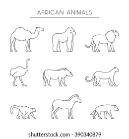 Vector line set of african animals. Outline dromedary, gorilla and lion. Line icon ostrich, warthog and leopard. Linear zebra, lemur and hyena. Linear silhouettes african animals isolated.