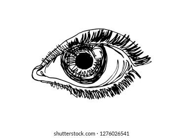 Vector line sketch of the eye
