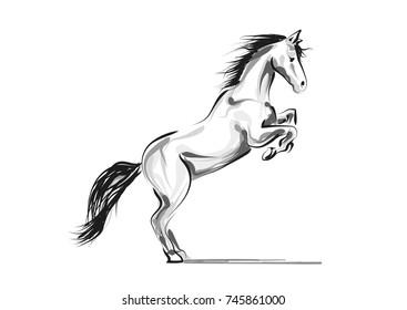 Vector line sketch horse