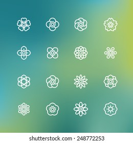 vector line symbol of flower, flower icon with blur background