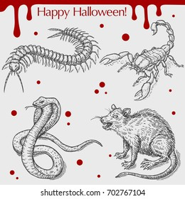 Vector linear illustration of the angry rat, poison snake, scorpion, centipede, blood stains,text Happy Halloween on the grey background. Hand drawn sketch of the set with Halloween objects.