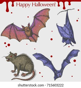 Vector linear illustration of the flying bat, angry rat with blood stains,spots,drops and text Happy Halloween on the grey background. Hand drawn sketch of the set with Halloween objects.