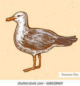 Vector linear illustration of seagull on summer beach isolated on paper background with abstract texture. Hand drawn color sketch in retro style of the sea bird. Image in vintage style for design.