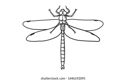 Vector lineart illustration of dragonfly on white background, hand drawn beautiful dragonfly insect sketch
